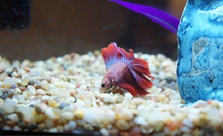 What is the Best Tank Size for Betta Fish