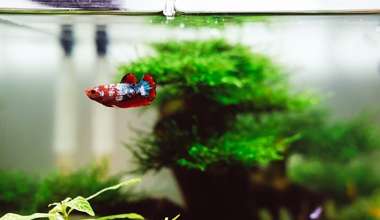 best tank mates for betta fish