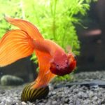 Do Bettas Need A Filter? [The Complete Guide]