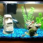 Best Toys and Decoration Ideas for Betta Fish