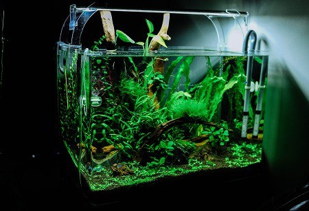 how to add live plants to your aquarium