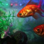 How to Lower pH in Aquarium? (Complete Guide)