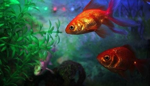 how to lower pH in aquarium