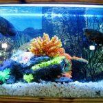 How To Raise pH in Aquarium? (Complete Guide)