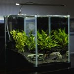 How To Get Rid Of Snails In Fish Tank?