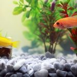 How To Get Rid Of Ammonia in Fish Tank?