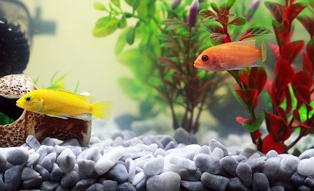 how to get rid of ammonia in fish tank