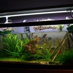How To Install Fish Tank Filter Cartridge