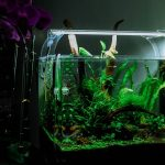 Should I Turn My Fish Tank Light Off At Night?
