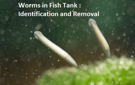 worms in fish tank identification removal
