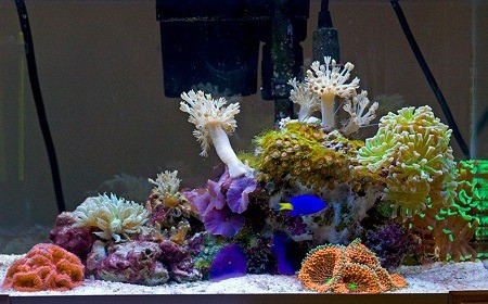 How to Clean Brown Algae off Aquarium Decorations