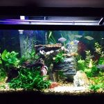 best 15 gallon fish tanks