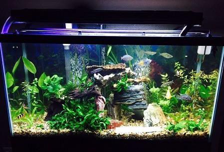 best 15 gallon fish tanks