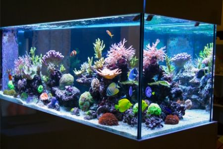 best 20 gallon fish tanks