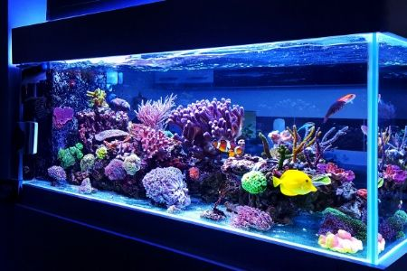 best 30 gallon fish tanks