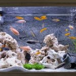 best 55 gallon fish tanks