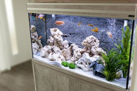 best canister filter for aquariums