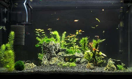 how to prepare sand for aquarium