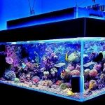 best 100 gallon fish tanks