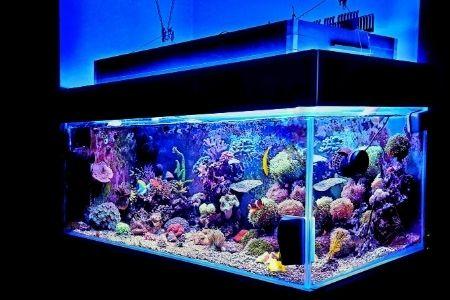best 100 gallon fish tanks