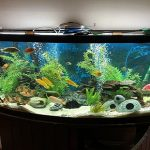 best 40 gallon fish tanks