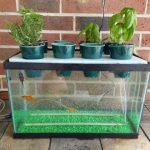 best aquaponic fish tanks