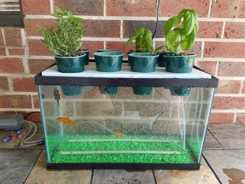 best aquaponic fish tanks