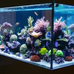 best rimless aquariums