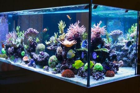 best rimless aquariums