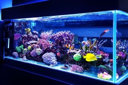Best Filter for 150 Gallon Fish Tank