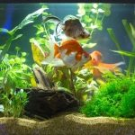 Best filter for 20 gallon tank