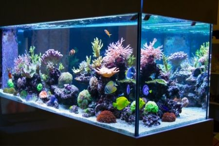 best filter for 125 gallon tank