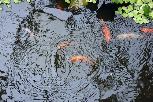 Best Koi Pond Filter
