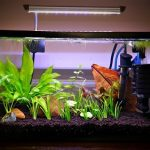 Best Filter for 5 Gallon Tank