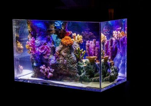 best heater for 10 gallon fish tank