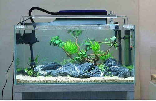 Best Filter for 40 Gallon Tank
